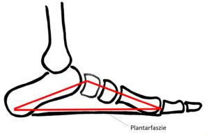 Fersensporn / Plantarfasziitis: Schematische Darstellung des Fußgewölbes